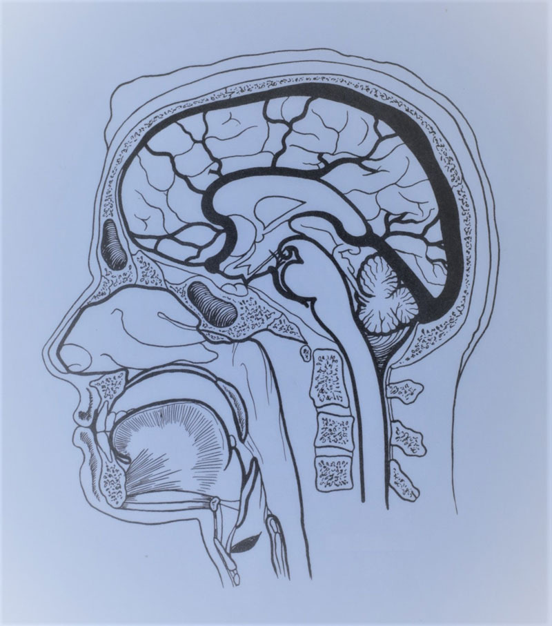 Brain Injury Lawyer in Kansas City (Attorneys With The Most Experience)